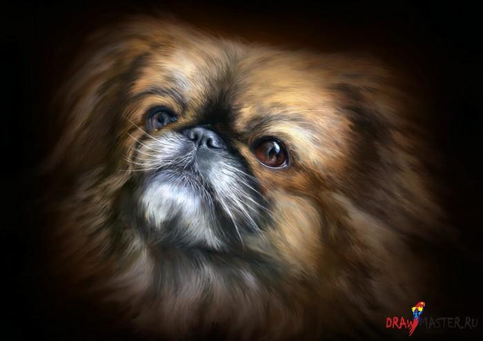 Как рисовать портрет маленькой собаки